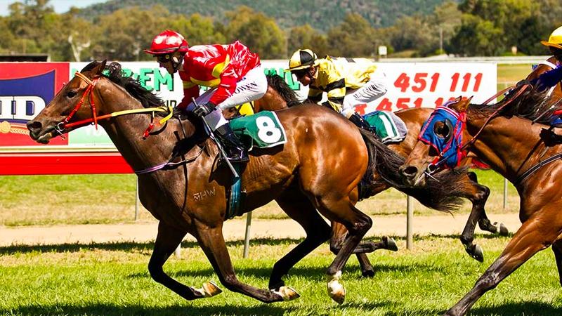 Wellington Picnic Races
