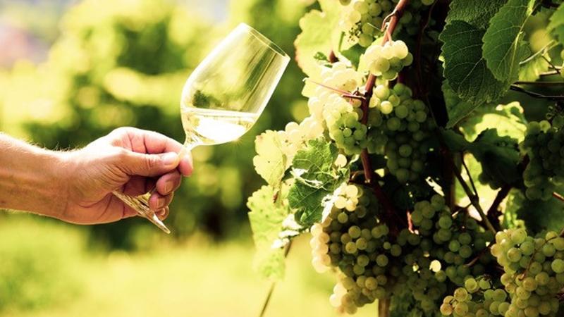 Mudgee Wine School in Focus - Riesling